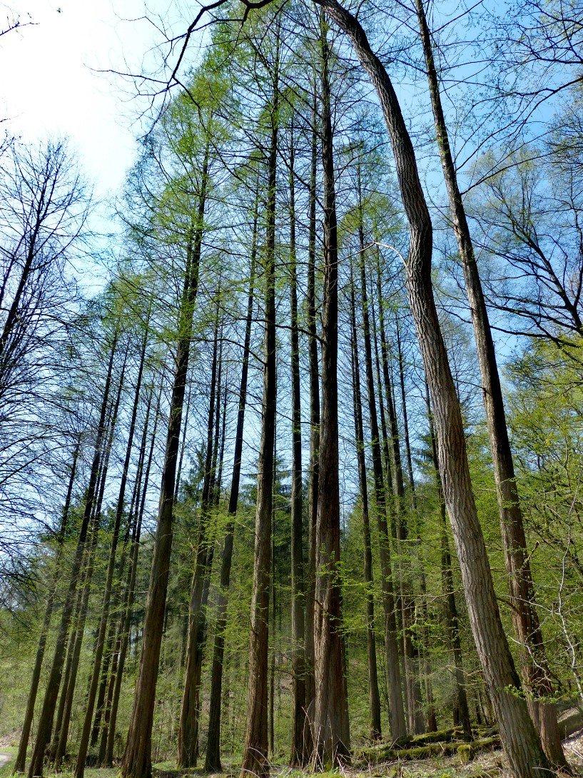 Groß klein Baum