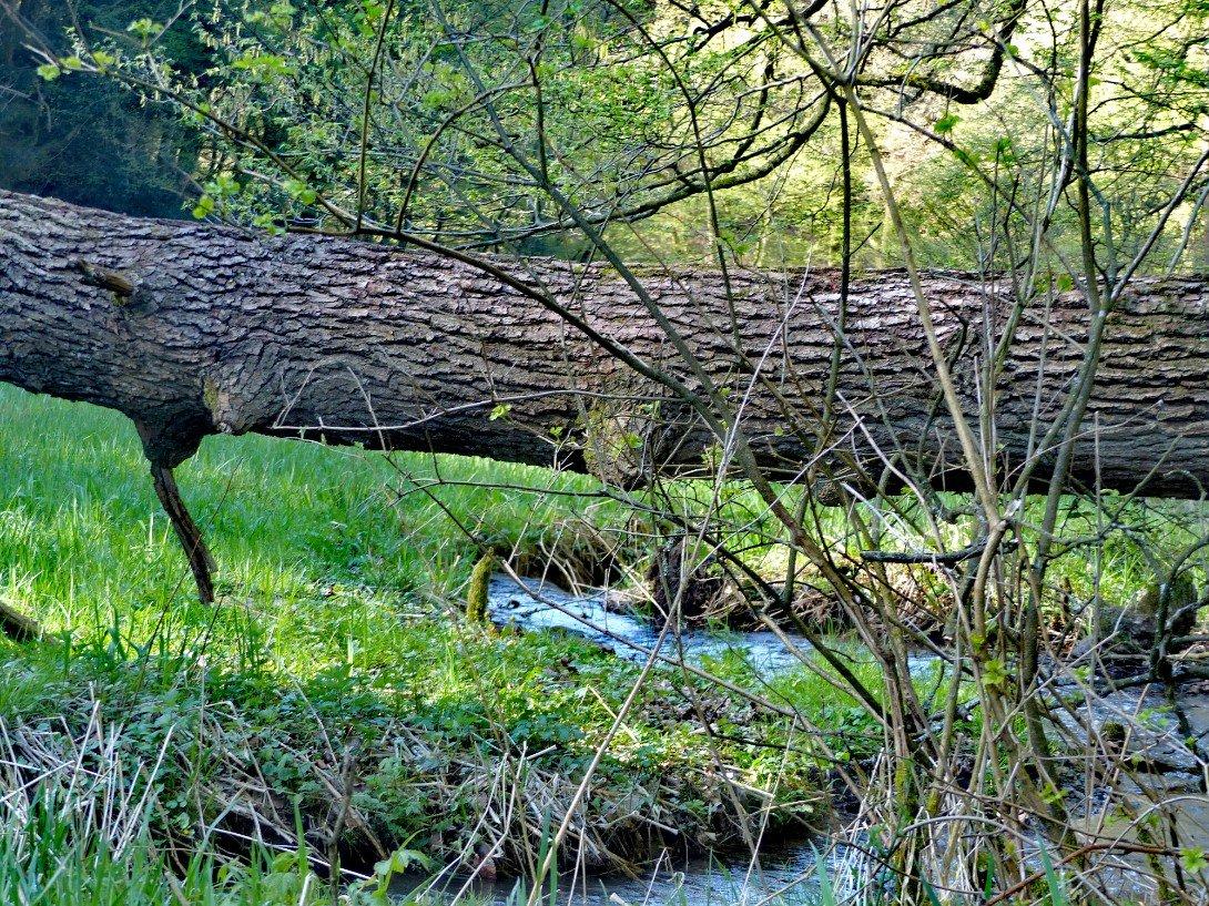Umgekippter Baum