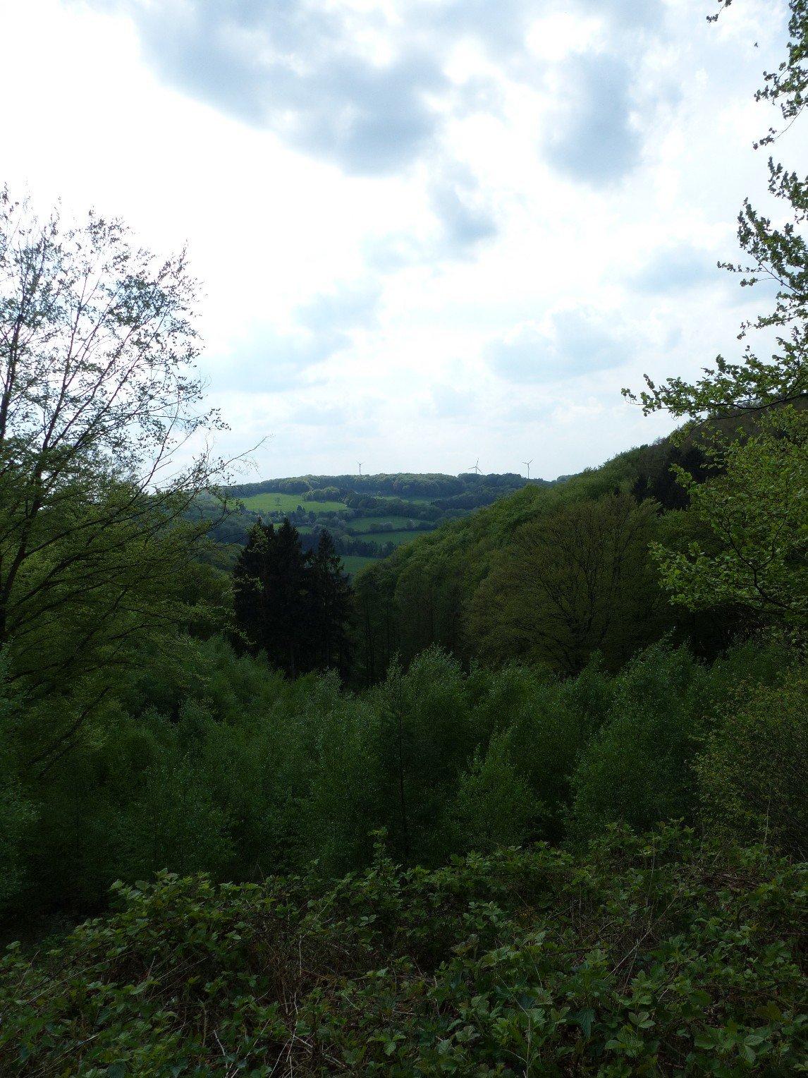 Grüne Wälder