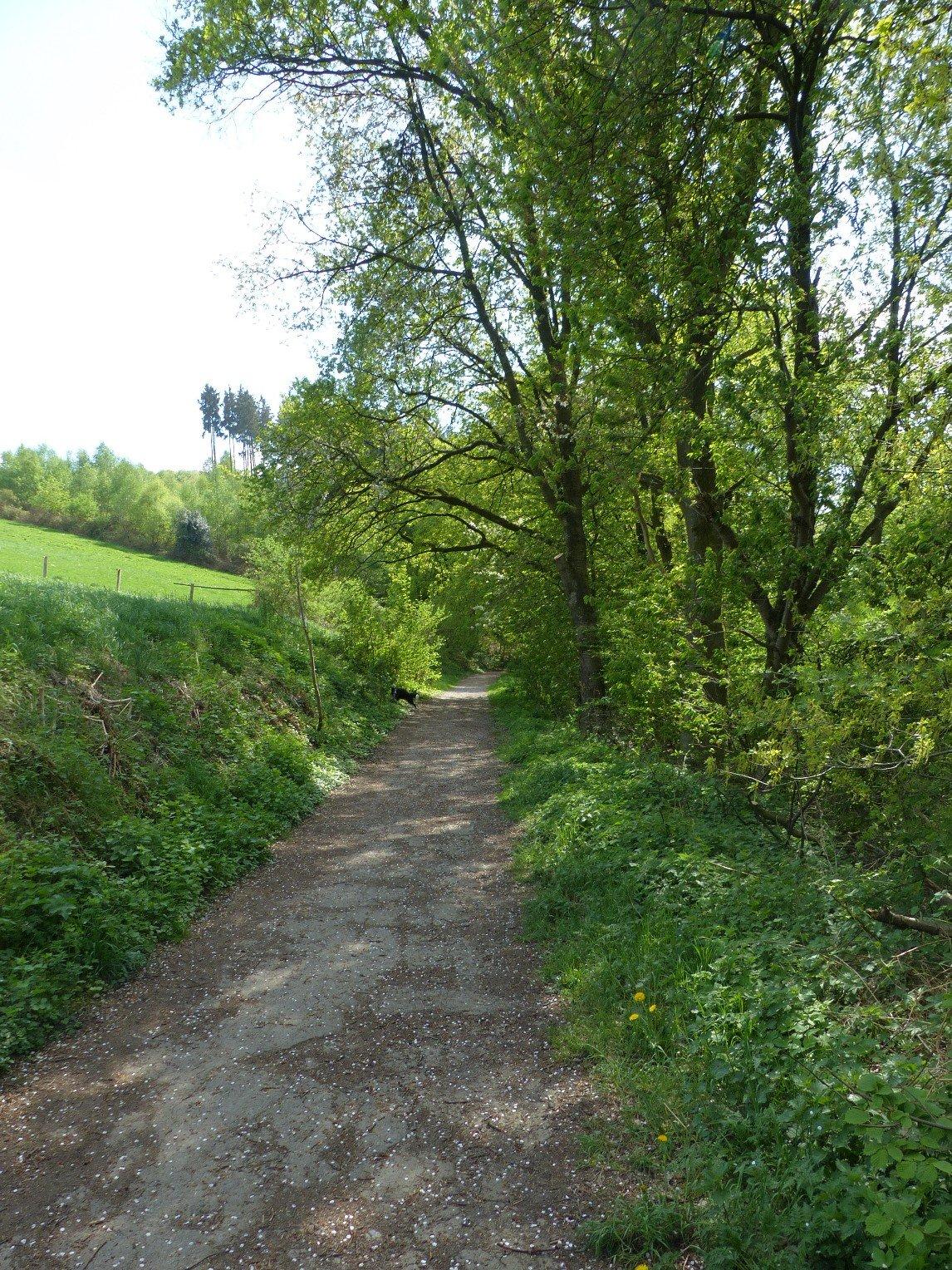 Weg Felderbachtal