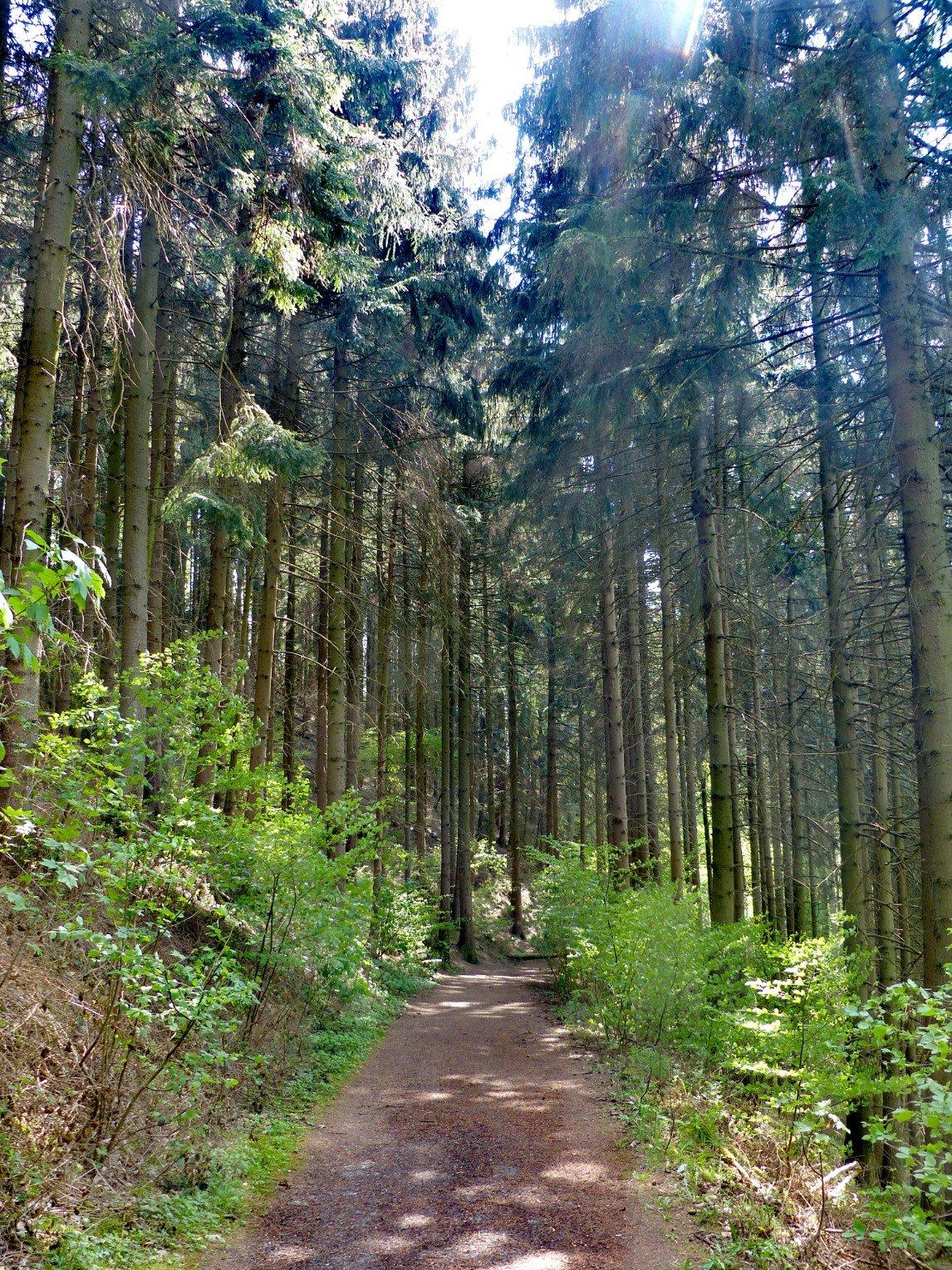 Nadelwald im Felderbachtal